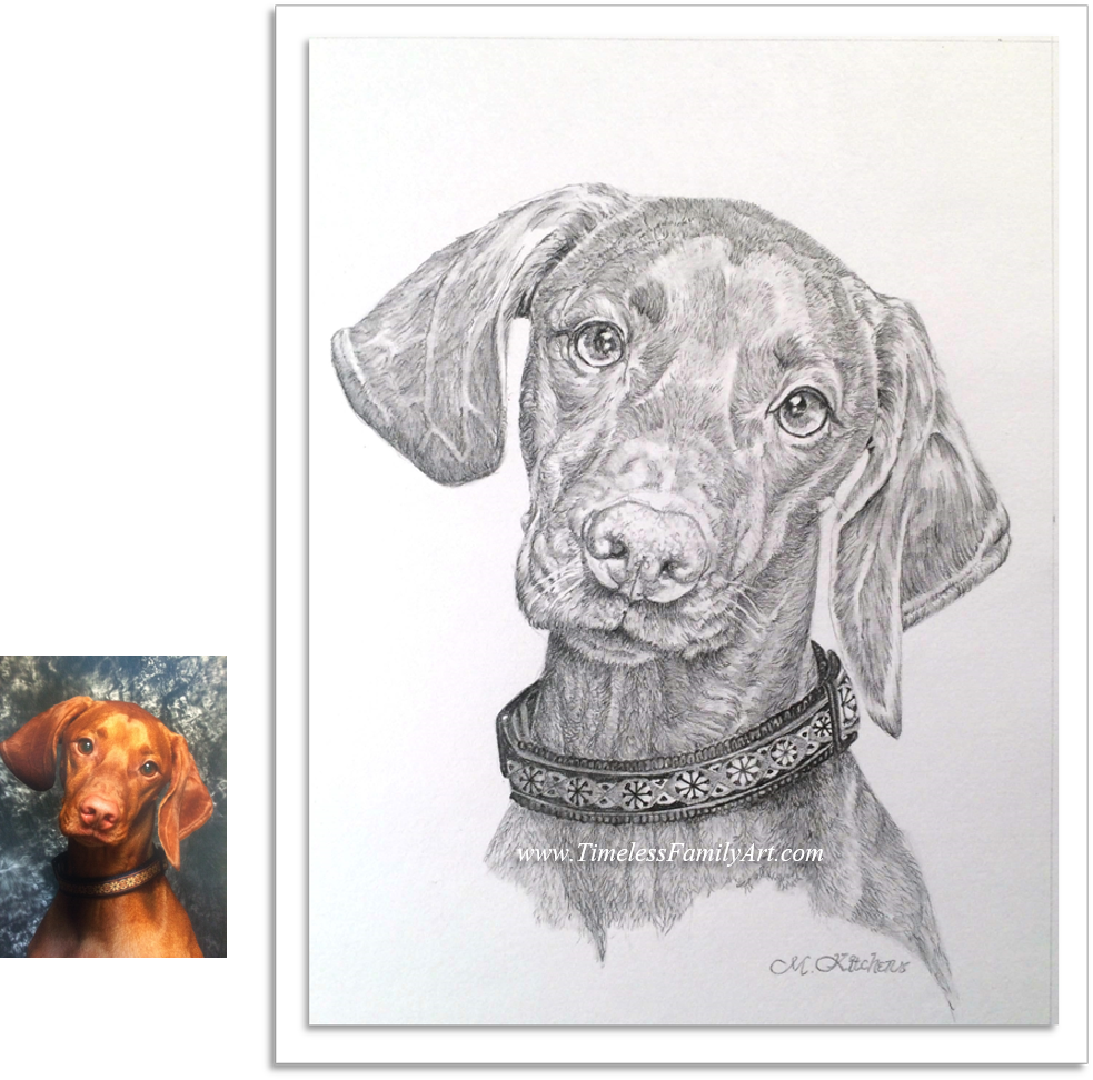 Portraits drawing animal. Custom pet paintings from