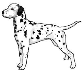 Dalmatian clipart black and white. Free to use public