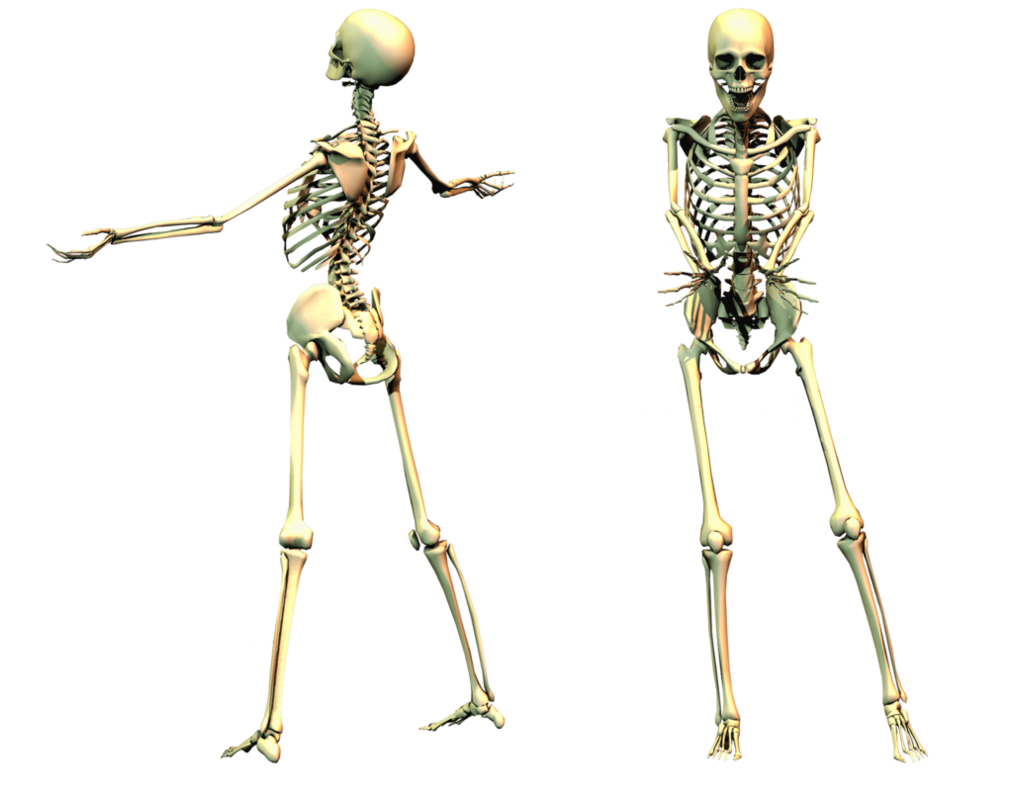spooky scary skeletons png