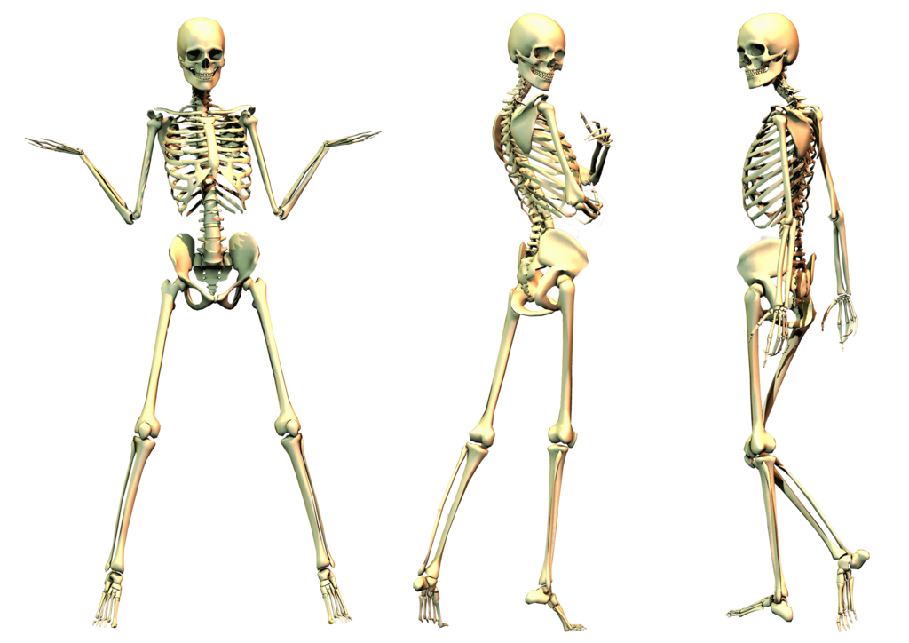 spooky skeleton png