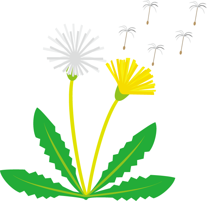 Dandilion drawing kid. Free dandelion cliparts download
