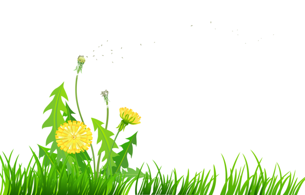 Dandelion clipart cute. Pin by mats spitzhoff