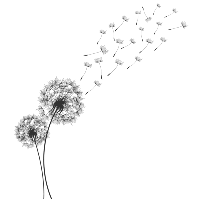 Dandelion clipart flower side. Pin by dawn thrall