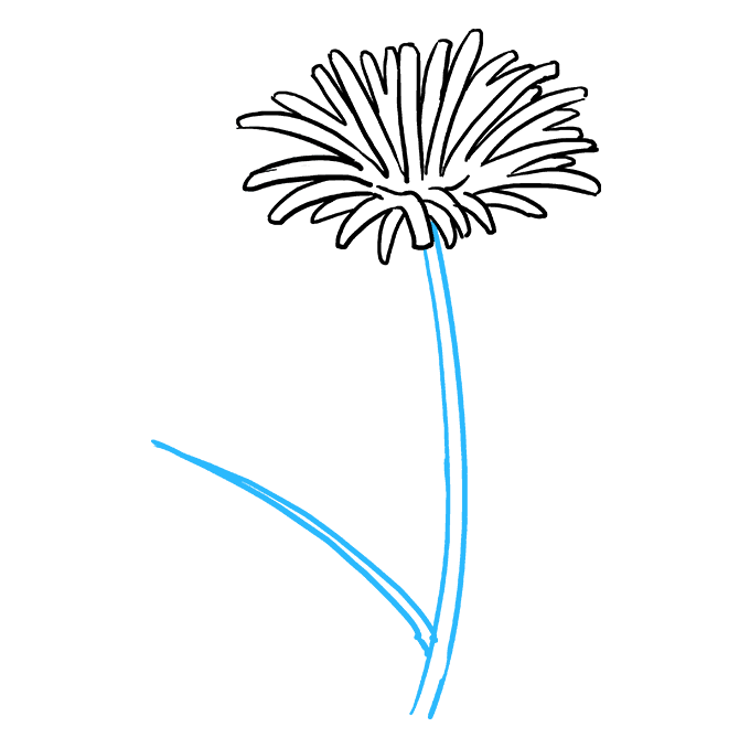 Dandelion clipart flower side. How to draw a