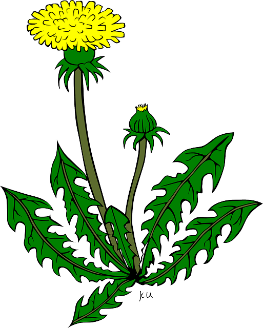 Dandelion clipart flower side. Walk on the wild