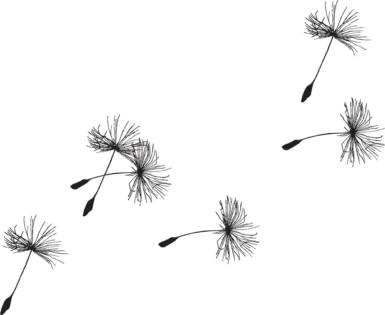 dandilion drawing clock
