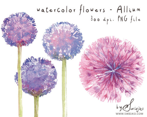 Dandelion clipart purple. Paintings watercolor flowers flower