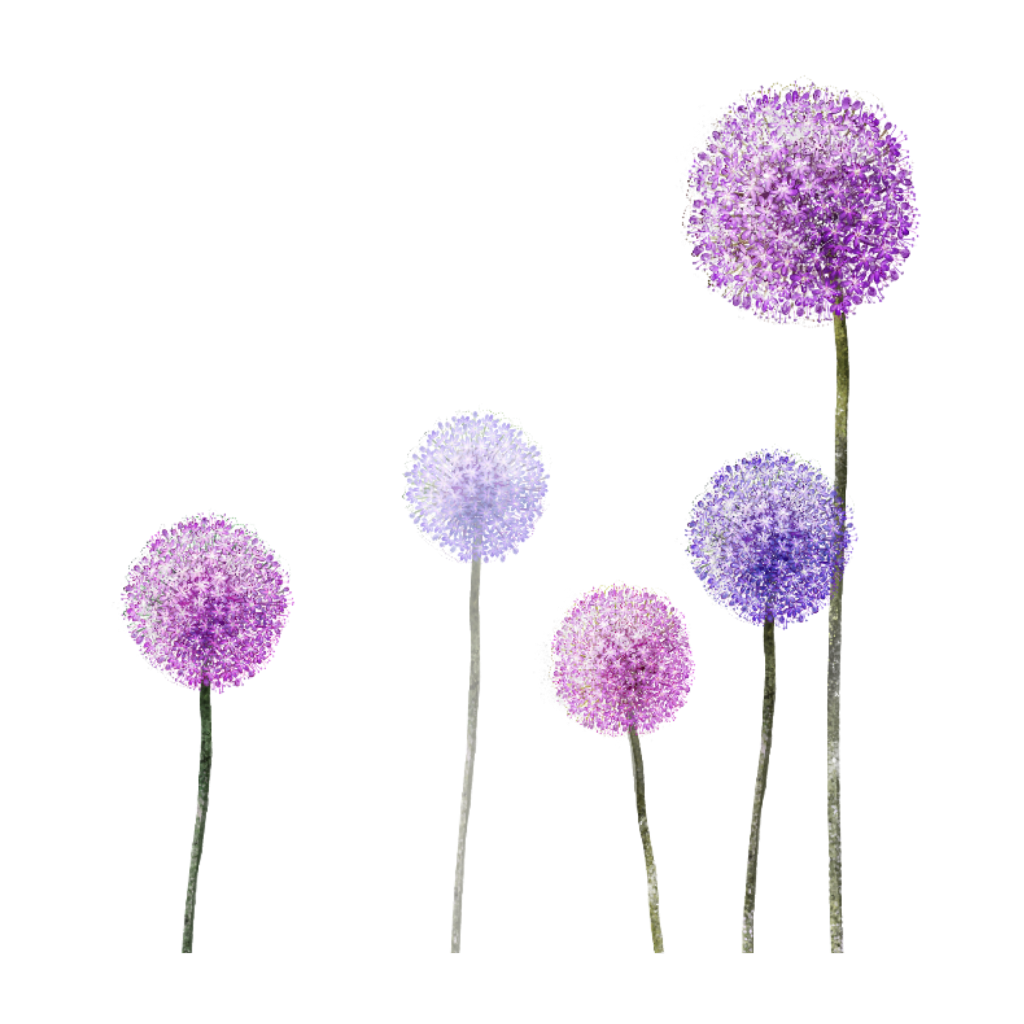 Dandelion transparent purple. Ftestickers flowers dandelions
