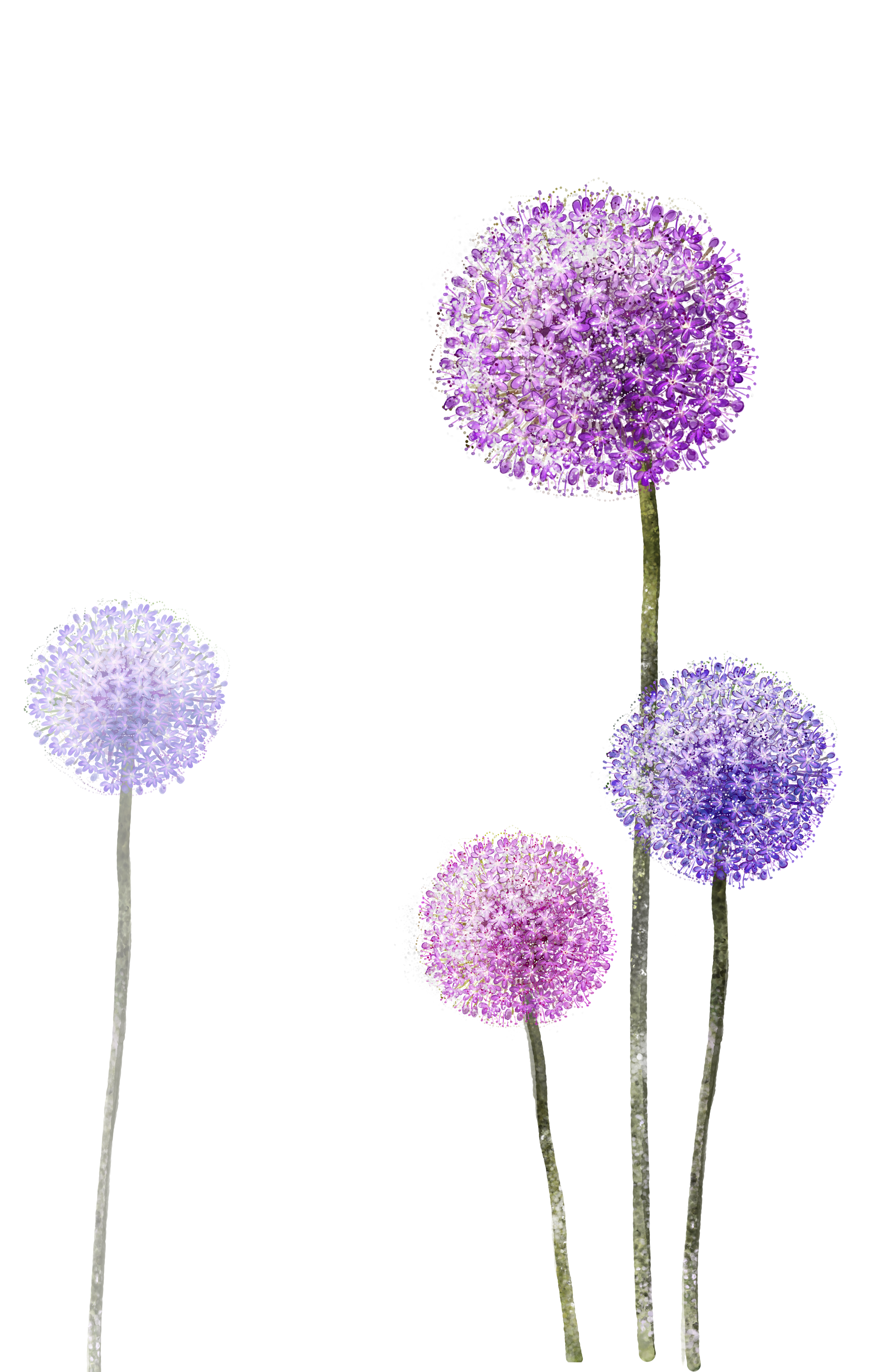 Dandelion clipart purple. Download paper wallpaper hq