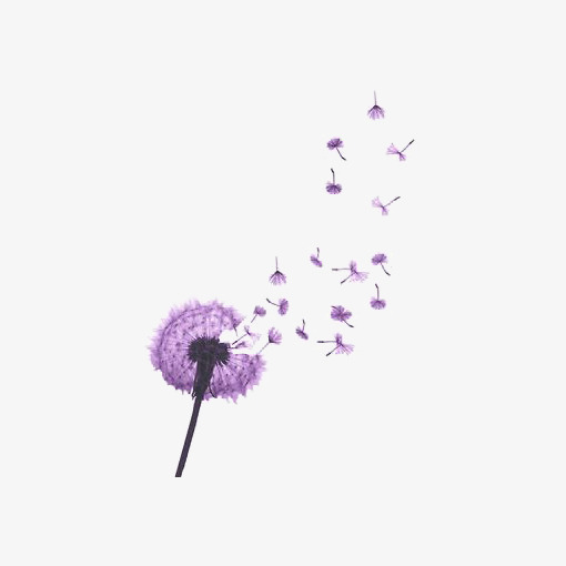 Dandelion clipart purple. Floating illustration botany png