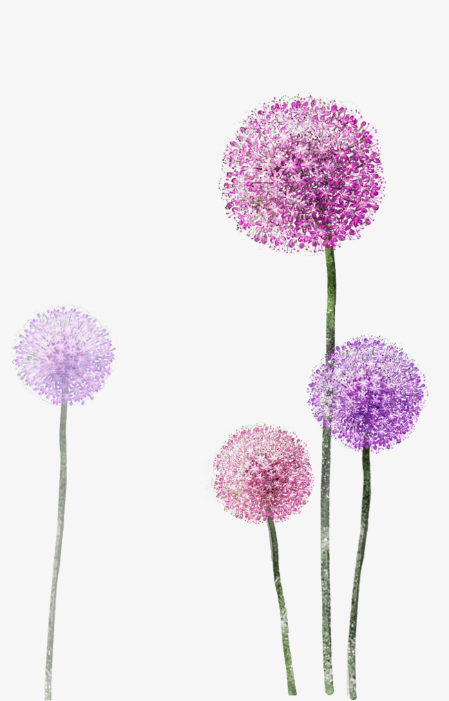 Dandelion clipart purple. Product kind flower png