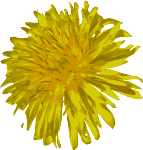 Drawing dandelion sow thistle. Clip art at clker