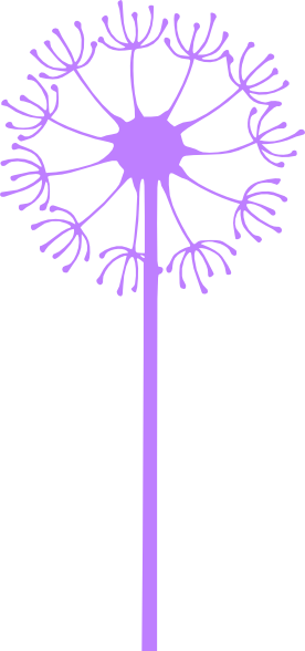Dandelion transparent purple. Flower royalty free