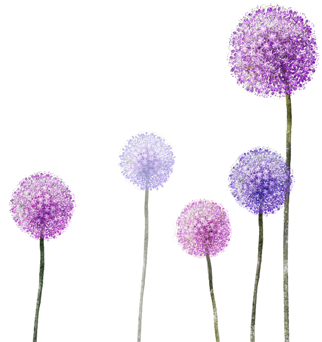 Dandelion transparent purple. Flowers ftestickers