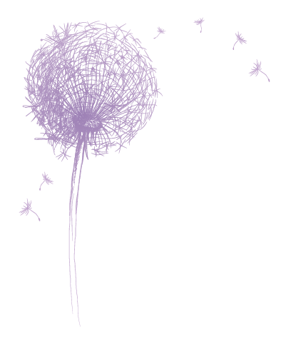 Dandelion transparent purple. Saben accent front the