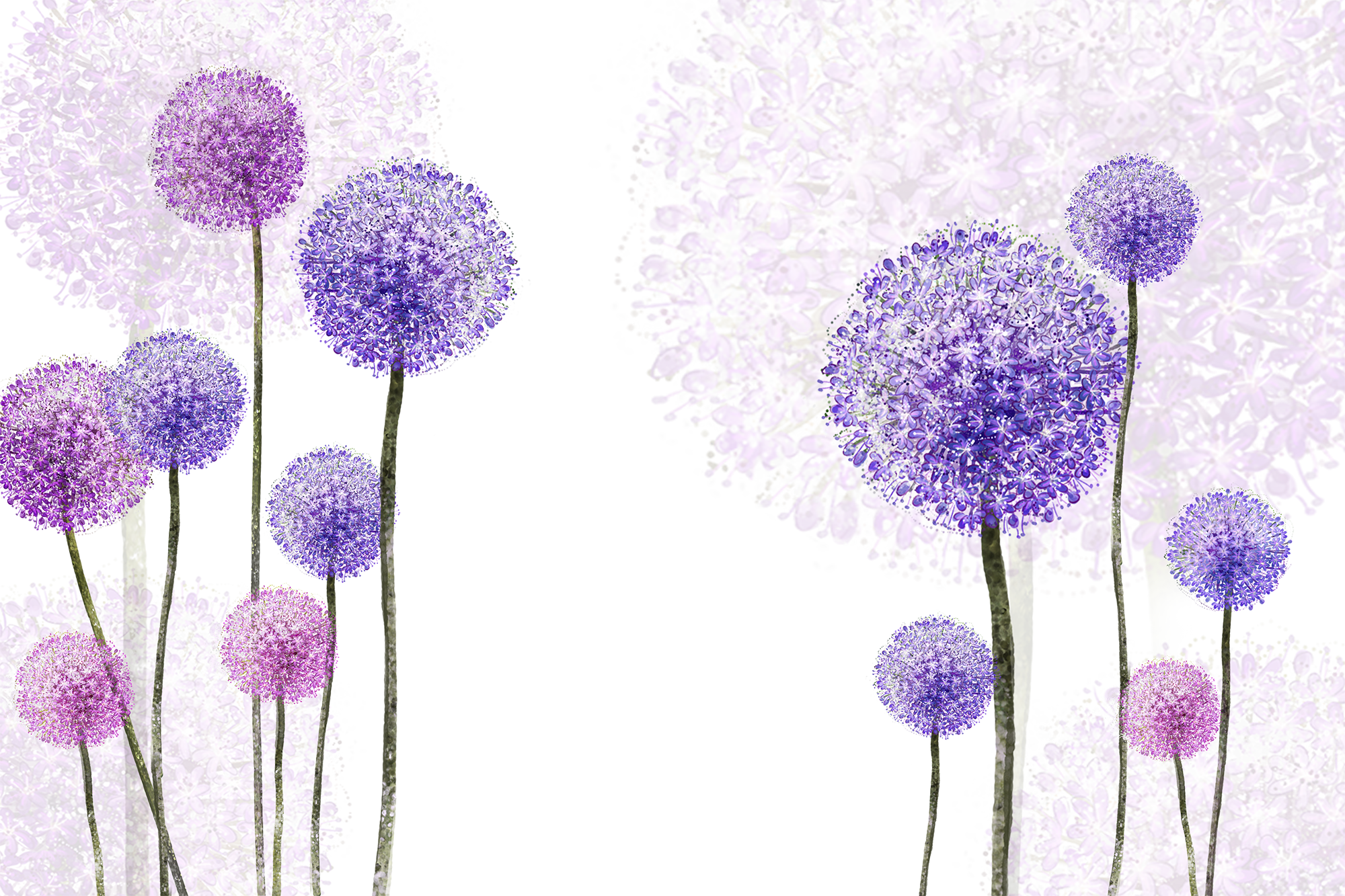 Dandelion transparent purple. Common transprent png free