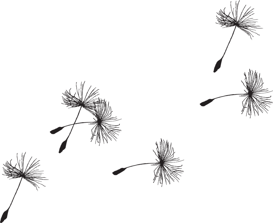 Free image on pixabay. Dandelion clipart cute banner library