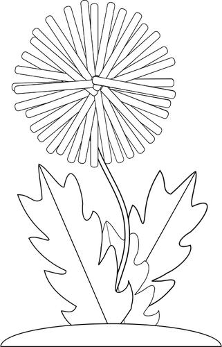 Drawing dandelion. Black and white at