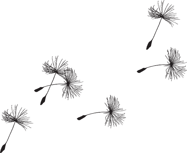 Dandilion drawing pen. Free image on pixabay