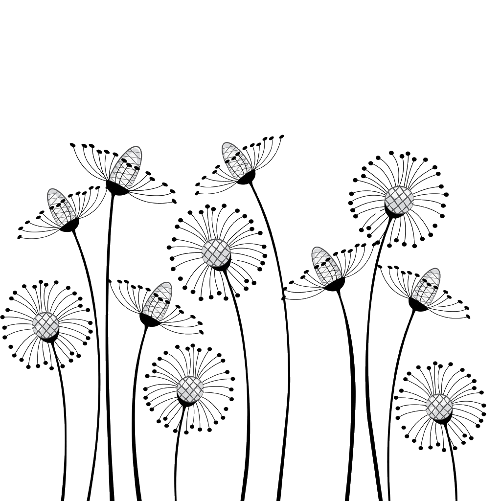 Dandilion drawing cartoon. Flower black and white