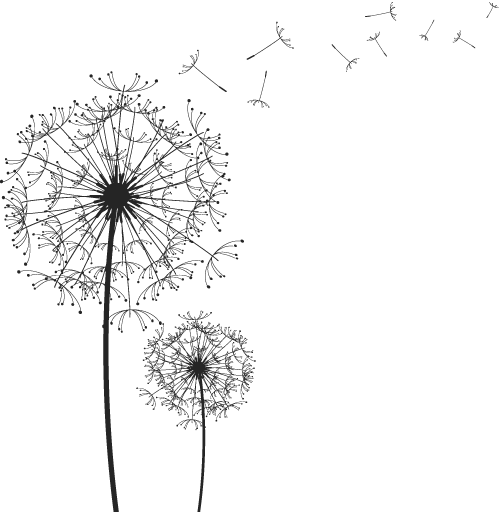 Dandilion drawing line. Black and white vector