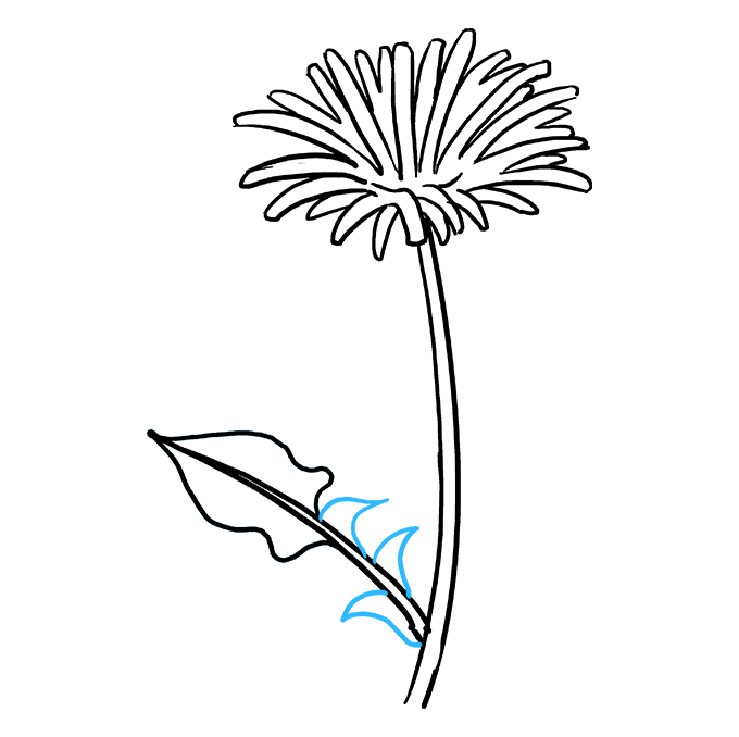 Dandilion drawing summer. How to draw a