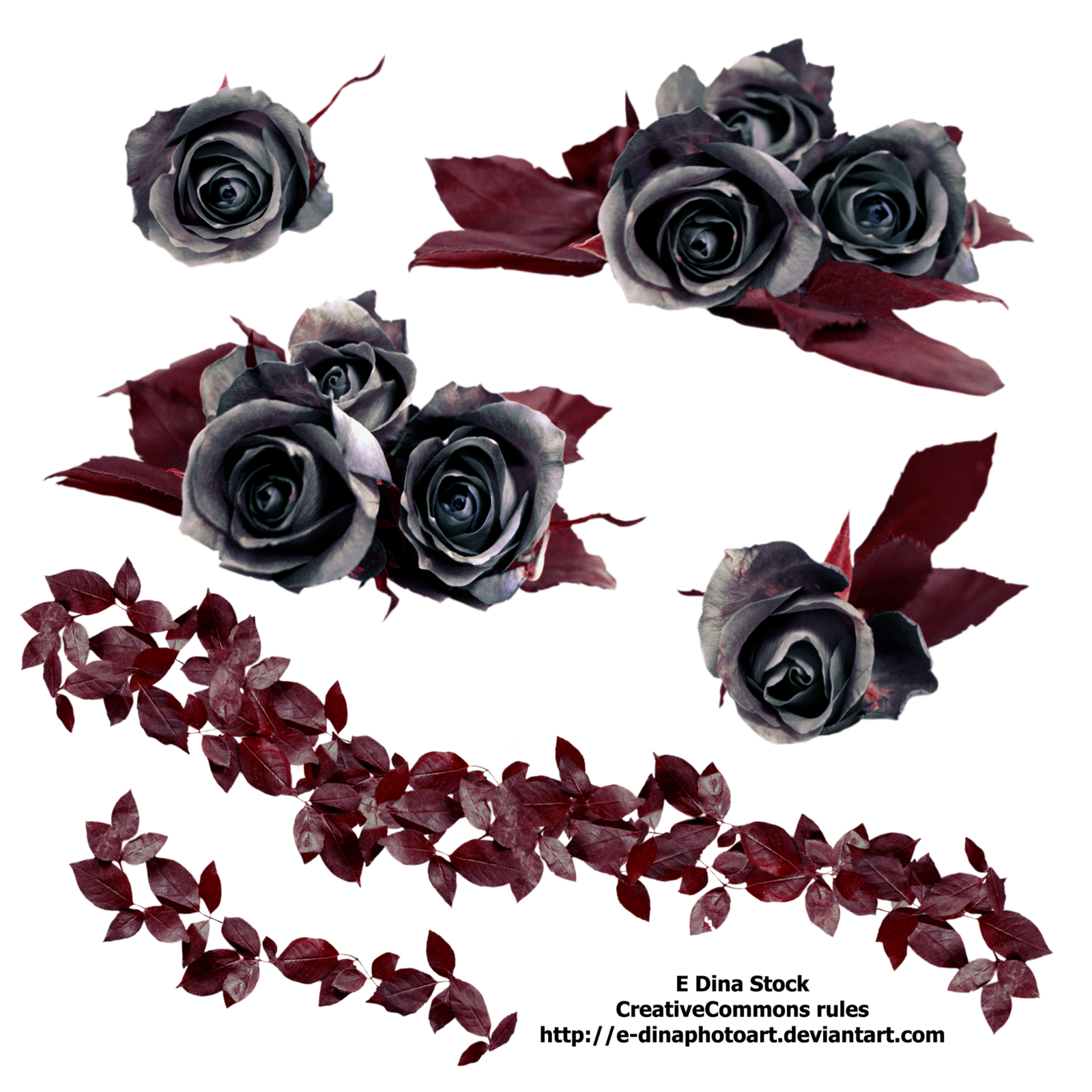 dead roses png