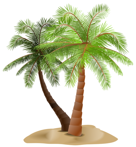 Date palm tree png. Gallery trees clipart