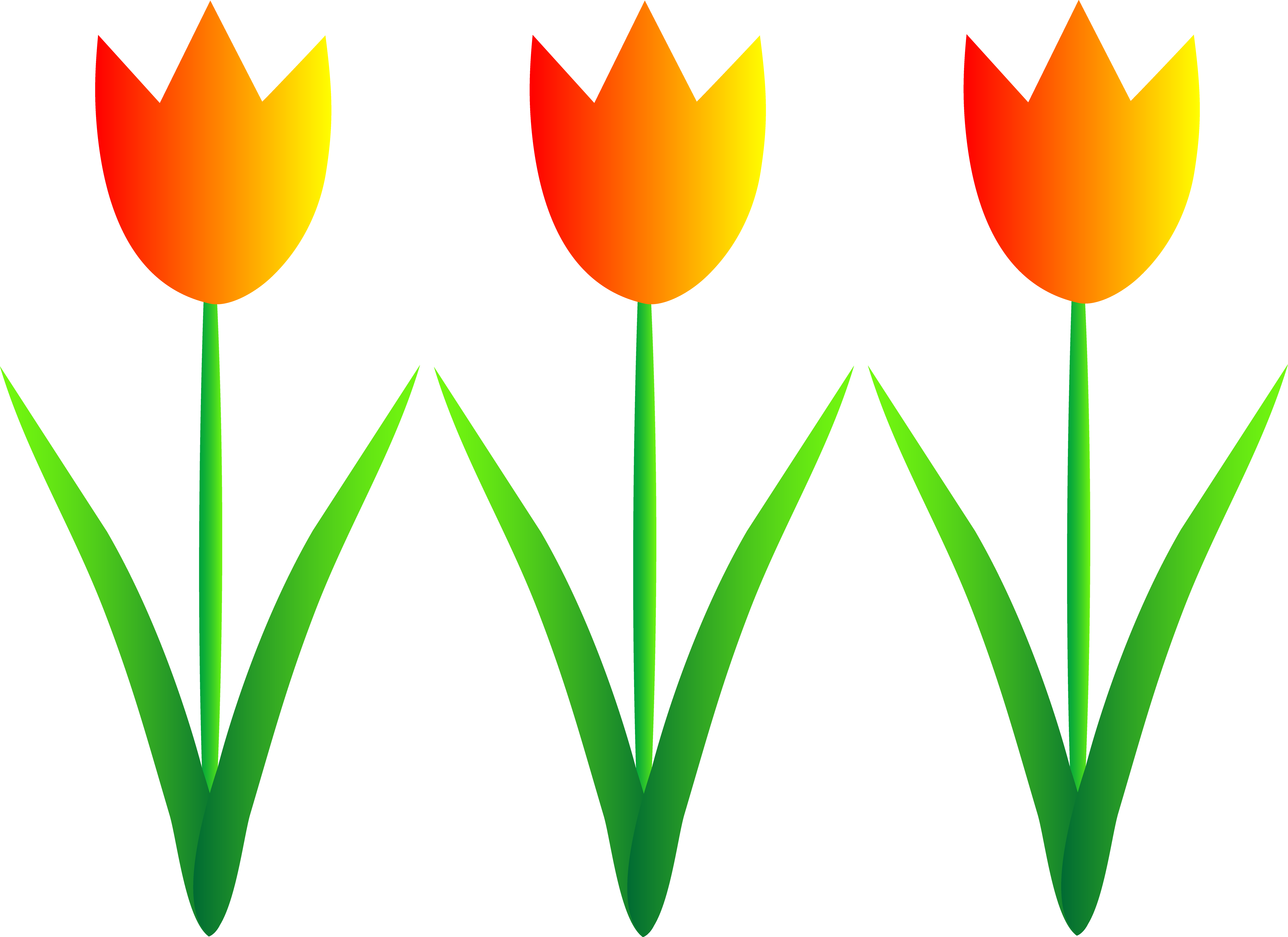 Transparent spring tulip. Free season clipart download