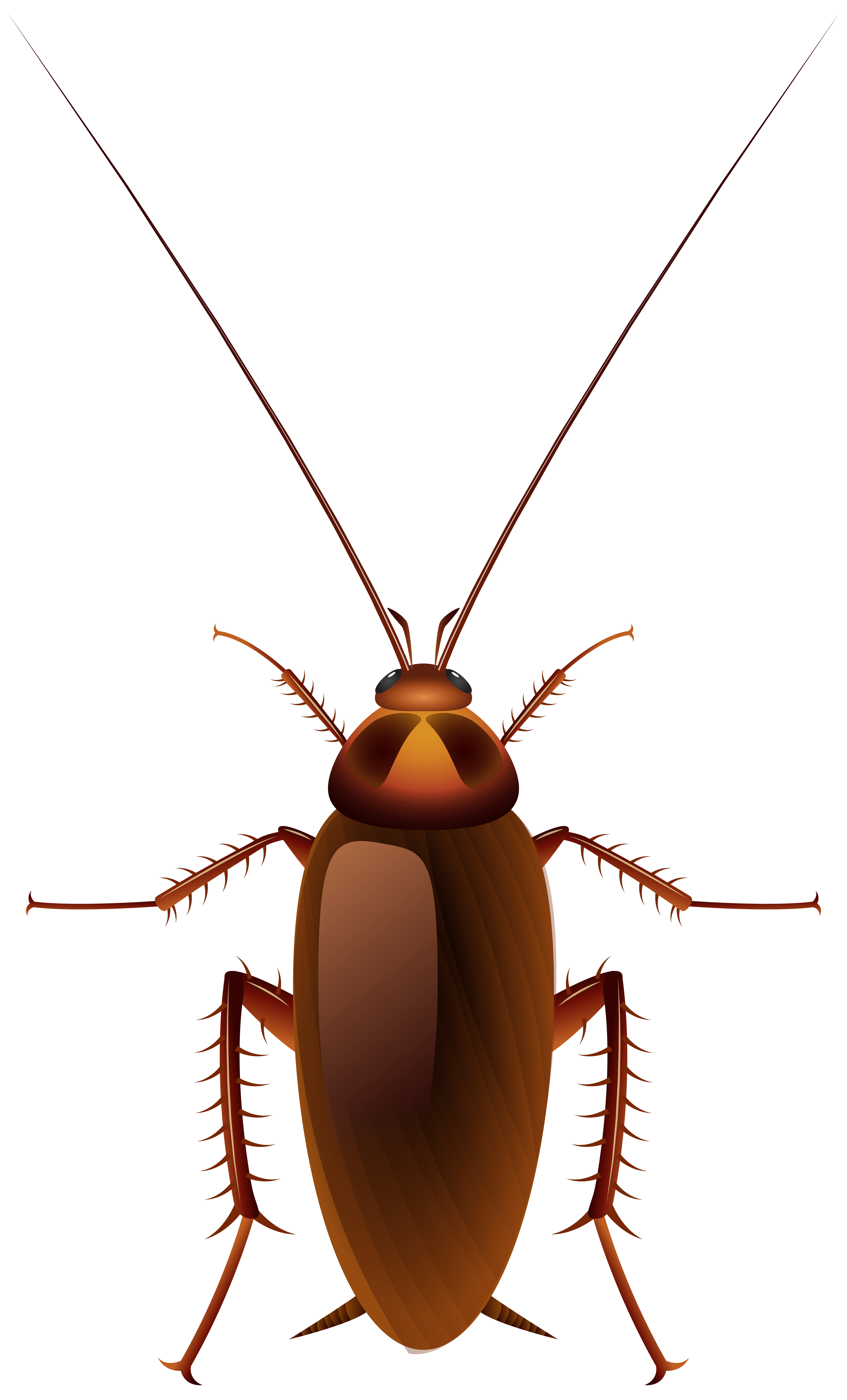 Dead ant silhouette png. Cockroach clipart at getdrawings