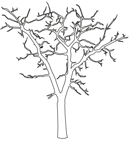 Dead clipart apple tree. Outline coloring page free
