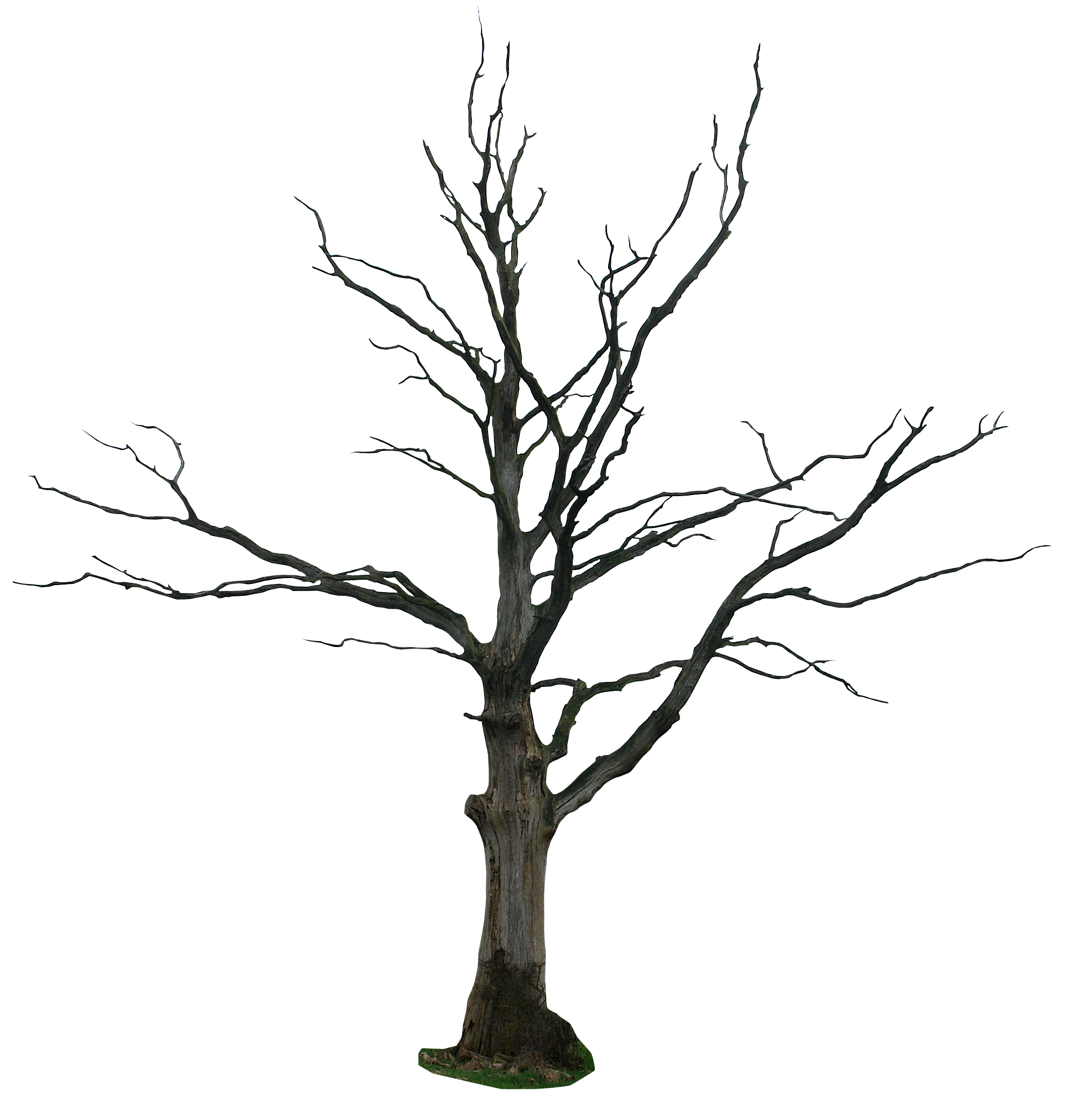 Trees clipart dead. Tree cartoon kid pinterest