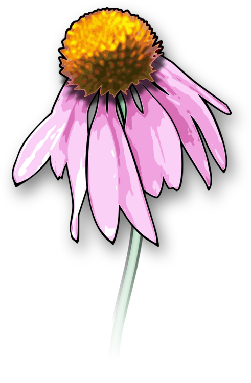Dead flowers png. Drawing death download art