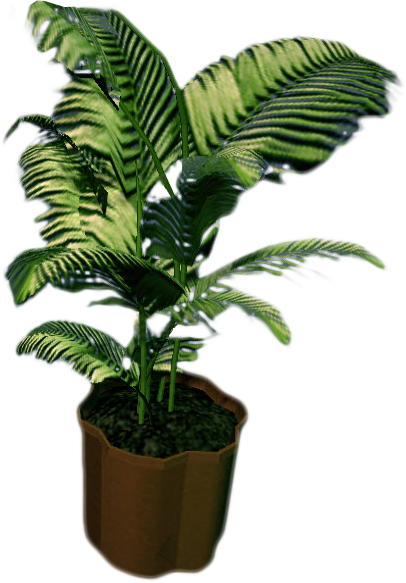 Dead palm tree png. Image rising small fern