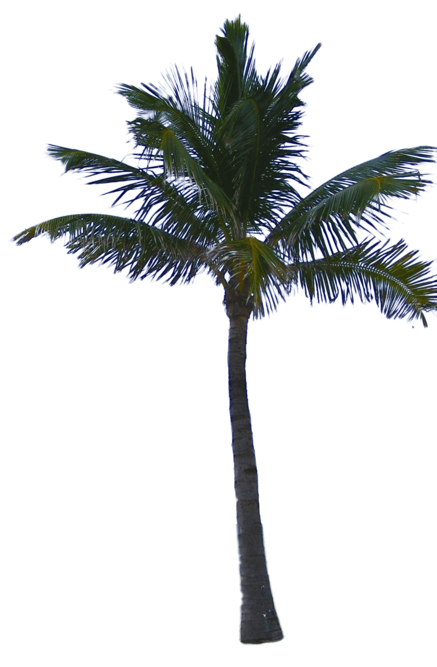 Dead palm tree png. Download hq image freepngimg