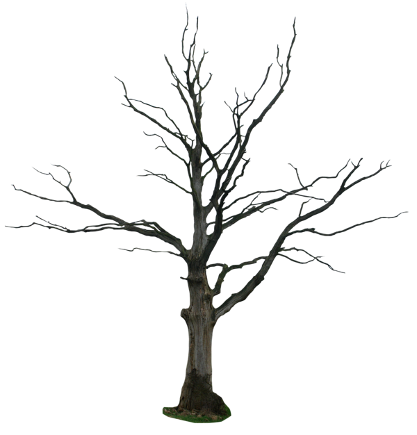 Wetlands drawing cypress tree. Dead png by gd