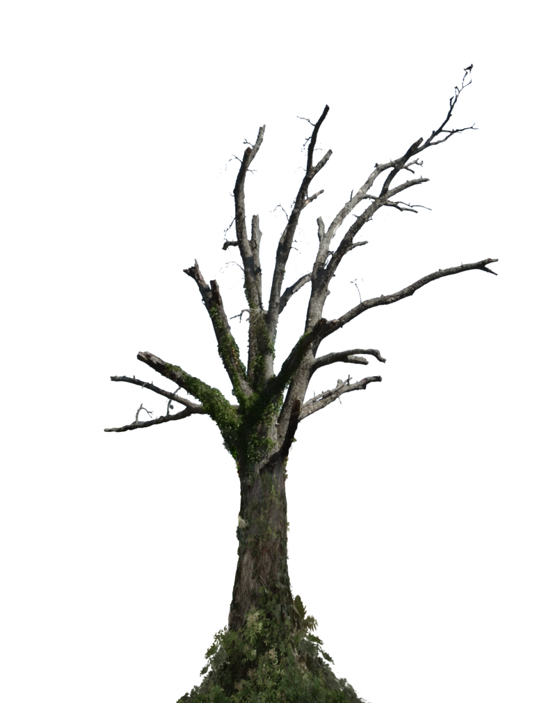 Dead tree png. Stock photo with ivy