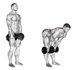 Deadlift drawing romanian. What is a and