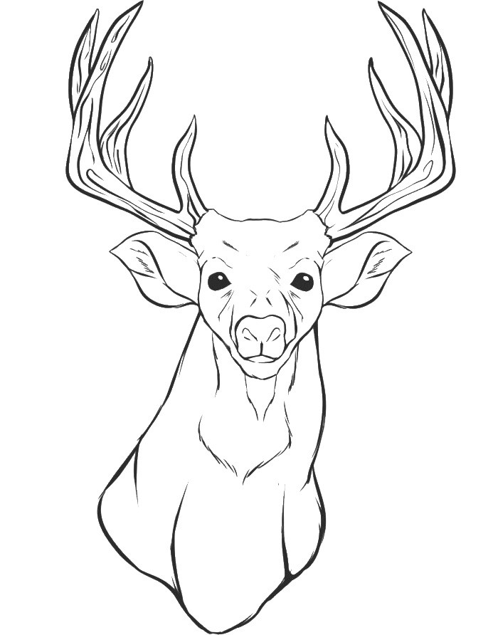 Dear drawing face. A deer head coloring