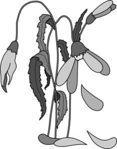 Death clipart flower. Wilted clip art library