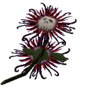 Death flower png. The sims wiki fandom