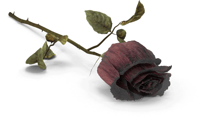 Death flower png. Lancaster wrongful attorneys pa