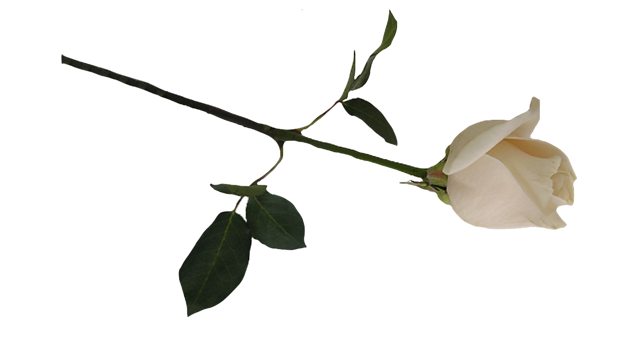 Death flower png. The of minimalism