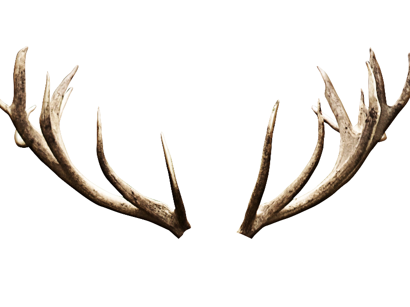 Deer antlers image isolated. Horns png banner black and white stock