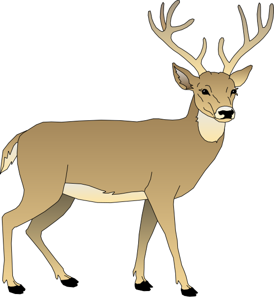 stag vector whitetail deer
