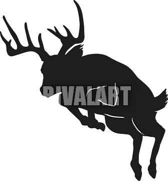 Hunting clipart white tail. Funny buck deer