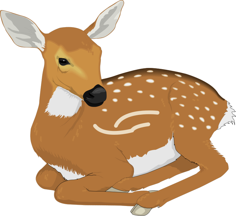 Stag vector doe. Deer clip art royalty
