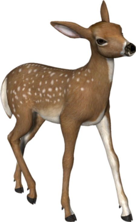 Deer clipart scenery. Tubes animaux page carolineblue