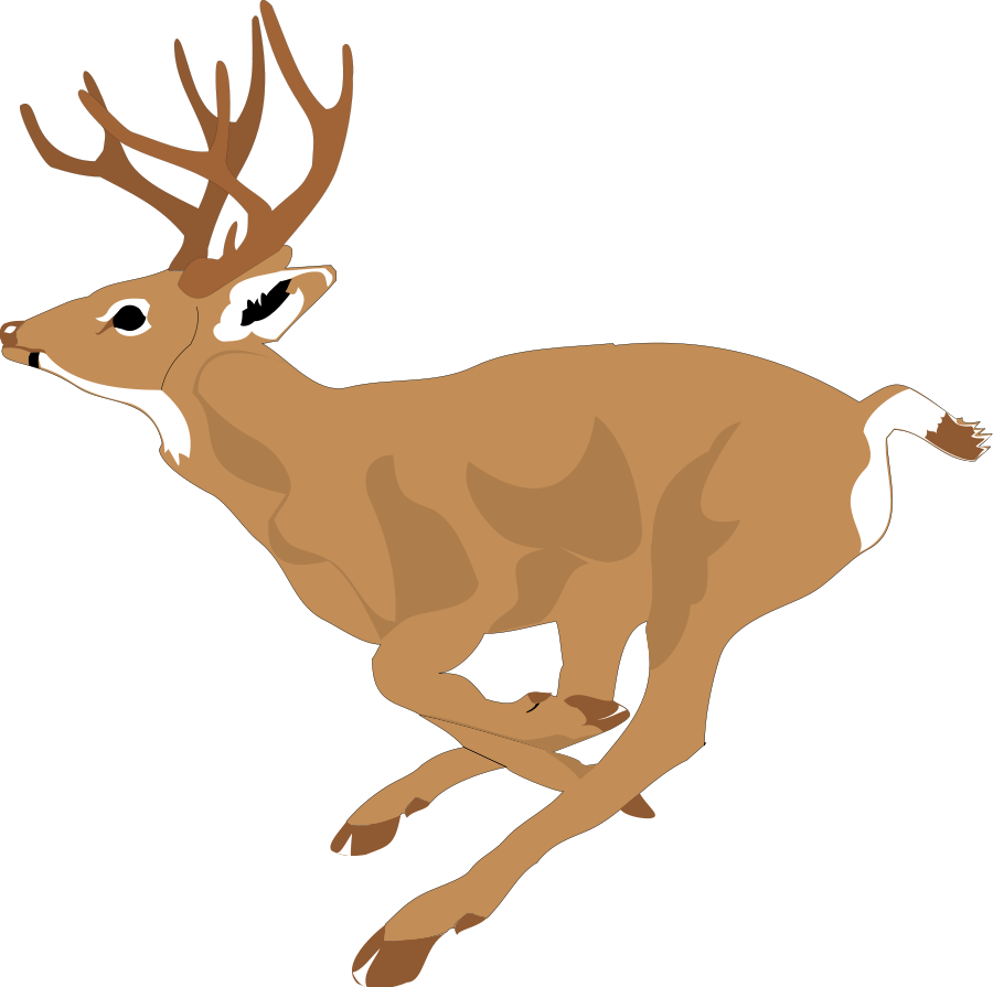 Deer drinking png. Collection of free