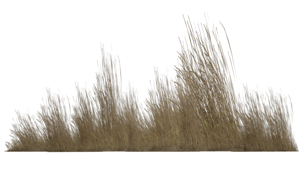 Deer grass png. Tall transparent pictures free